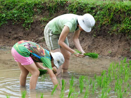 Jin and Robyn planting rice in the paddy